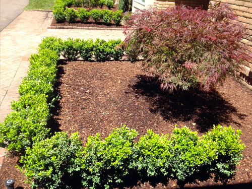 Planting / Irrigation